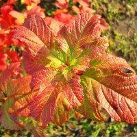 Осеннии краски в городе :: Лидия (naum.lidiya)