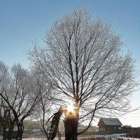 Солнце на разломе дерева :: Марина Marina