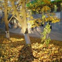 Осеннее золото листьев :: Татьяна Пальчикова