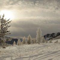 Поутру зимой проснувшись 6 :: Сергей Жуков