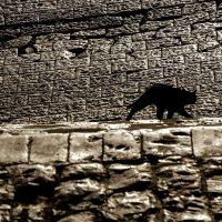 Черная кошка :: Людмила Синицына