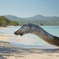 Punta Rucia, Dominican Republic :: Сергей *