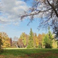 Осень в Павловском парке :: Алексей Цветков