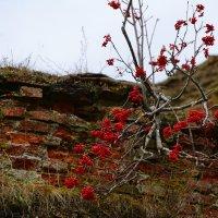 И на камнях растут деревья. :: Paparazzi