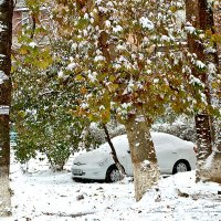 В Ташкент пришла зима (21 ноября) :: Светлана