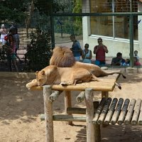 Парижский зоопарк :: Радий Тен
