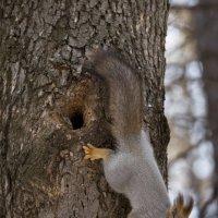 Белочки в зимнем парке. :: Виктор Куприянов