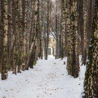 Прогулка в парке :: Владимир Безбородов