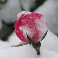 Снег не различает маленьких и взрослых. :: Вячеслав Медведев