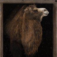 Портрет в естественном интерьере :: Ирина Климова