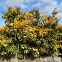 Это не краски осени, это такое деревце! :: Natalia Harries