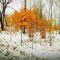 Первый снег :: Evgenij Schleinikov