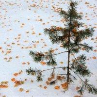 Конопатая зима :: Исаков Александр