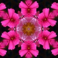 Цветочный калейдоскоп :: Елена