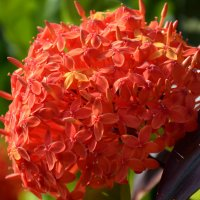 Аленький цветочек :: Татьяна Евдокимова