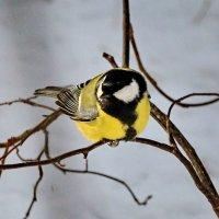 Птички-невелички :: Галина