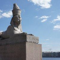 Египетские сфинксы на Университетской набережной :: Елена Павлова (Смолова)