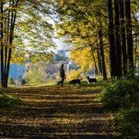 Так хорошо погулять с собаками в осеннем лесу! :: Владимир Безбородов