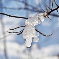 ледяная букарашка :: юрий иванов
