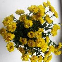 Все еще осенние цветы :: татьяна