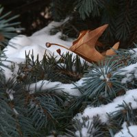 Зима идет :: Александр Грищенко