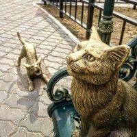 """Памятник """"Невозмутимый кот"""" в г. Благовещенске. :: Константин Поляков"""