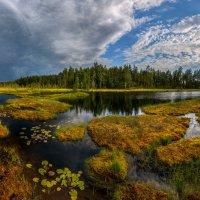 Заболоченное озеро :: Фёдор. Лашков