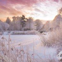 Зимнее солнце :: Margit Z