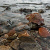Осенний лист :: Сергей Герасимов