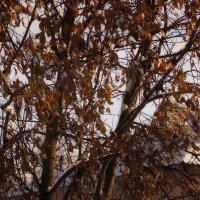 Осенние листья-3.Снег и солнышко. :: Фотогруппа Весна.