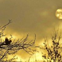 солнце спряталось за тучу :: Елена