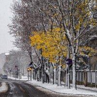 Первый снег 3 :: shvlad