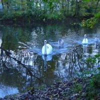 Лебединое озеро... :: Lilly