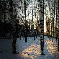 Вечерний свет :: Нина Алексеева