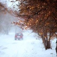 Метель и неопавшие листья... :: Ольга