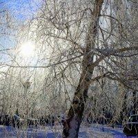 И стоят деревья словно в серебре.. :: Андрей Заломленков