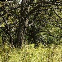 Кромка леса :: Оксана Сергеева