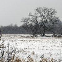 Снег идет :: shvlad