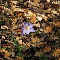 Цветы осени :: Наталья Джикидзе (Берёзина)