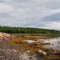 Отлив на Белом море :: Светлана Тремасова