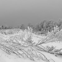 Зима в ноябре :: Оксана Лада