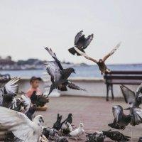 птицы :: Анна Вязьмина-Кирилюк