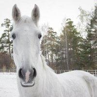Лошадь :: Дима Пискунов