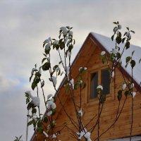 Не хотят зимы :: Николай Масляев