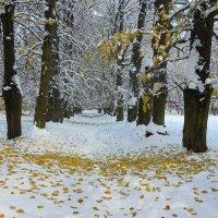 Падают листья :: Александр Михайлов