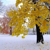 Первый снег :: Александр Михайлов
