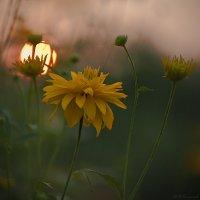 Персиком нежным закат догорает... :: Владимир Комышев
