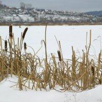 На озере :: Светлана Т