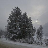 А снег идёт. :: Валерий Медведев
