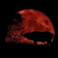 Африканская ночь :: Vladislav Gushin